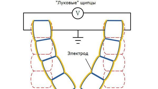 Физики создали искусственные мускулы из клеток лука и золота