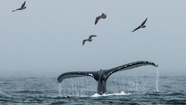Около 40 китов погибли у берегов Чили