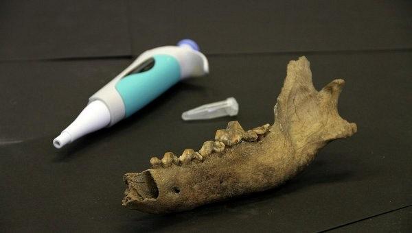 Ученые: человек мог приручить собак свыше 40 тысяч лет назад