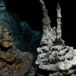 Ученые нашли возможное «потерянное звено» между микробами и животными