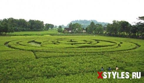 Круг на рисовом поле в Индонезии 2011.