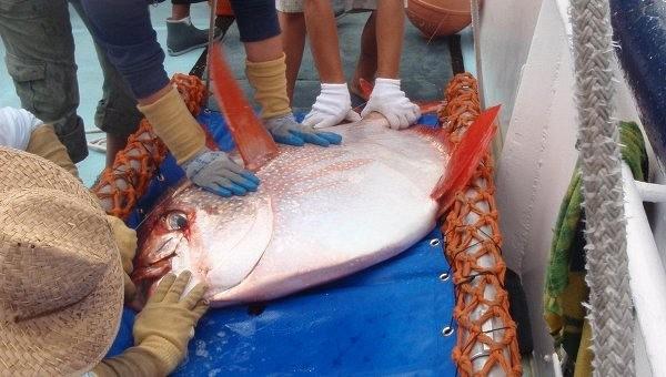 Science: ученые нашли первую в мире теплокровную рыбу