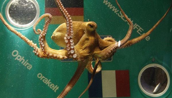 Осьминоги видят мир не только глазами, но и кожей.