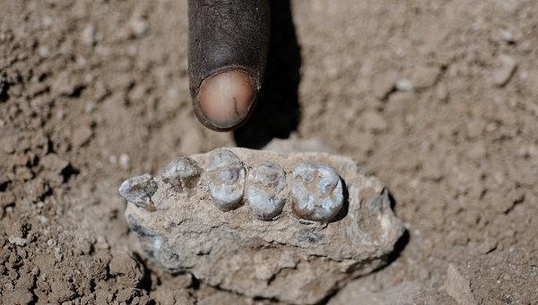 """Палеонтологи нашли в Эфиопии останки """"Люси"""""""