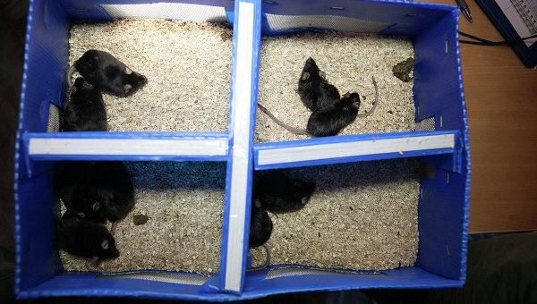 Жизнь в невесомости вызвала атрофию кожи у мышей